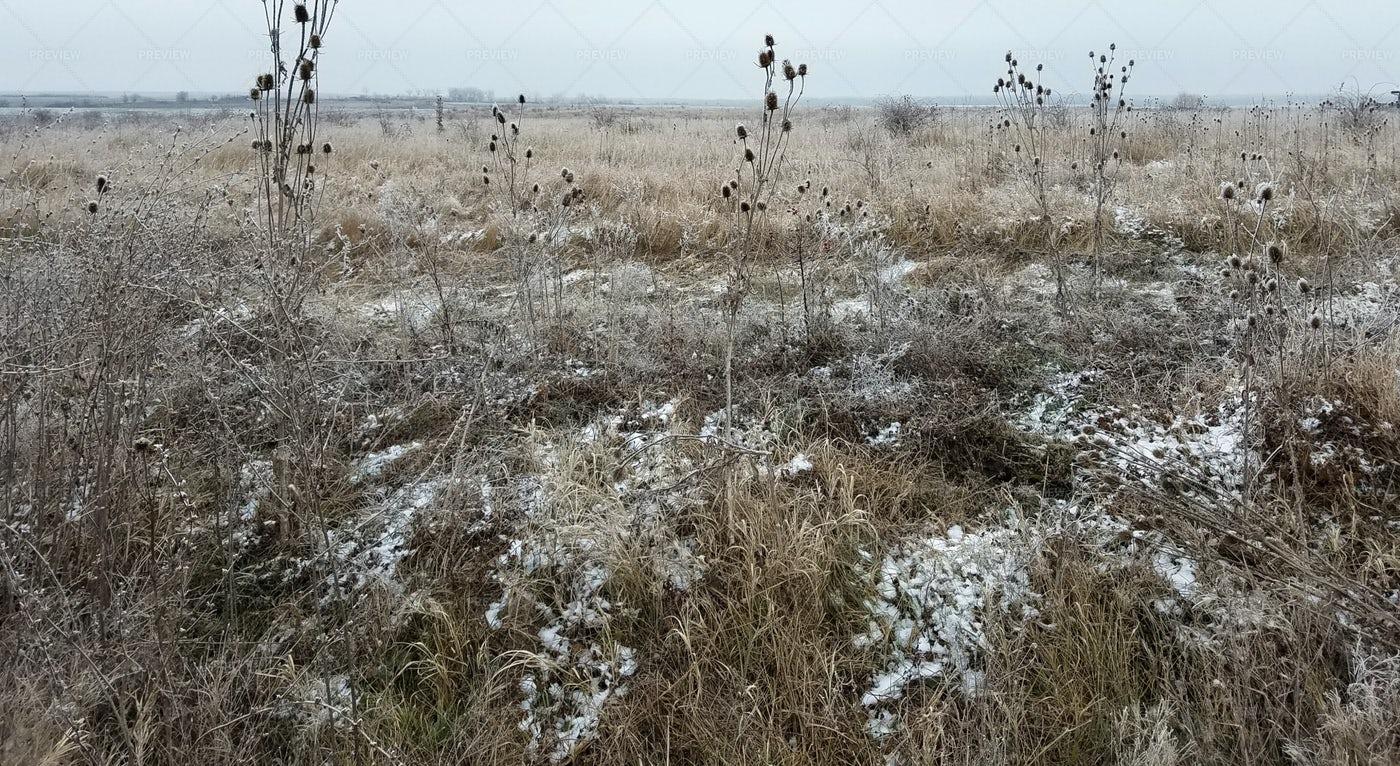 A Frozen Thistle Field: Stock Photos