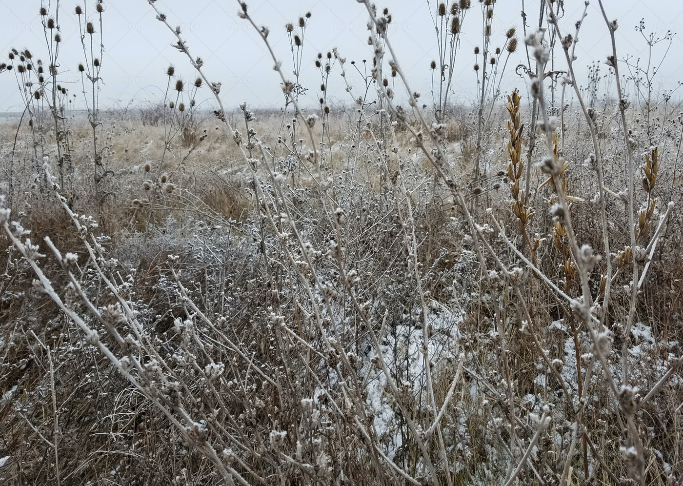 Wilted Thistle Field: Stock Photos