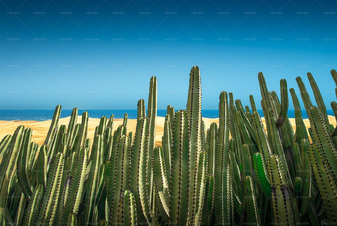 Dunes With Cactus: Stock Photos