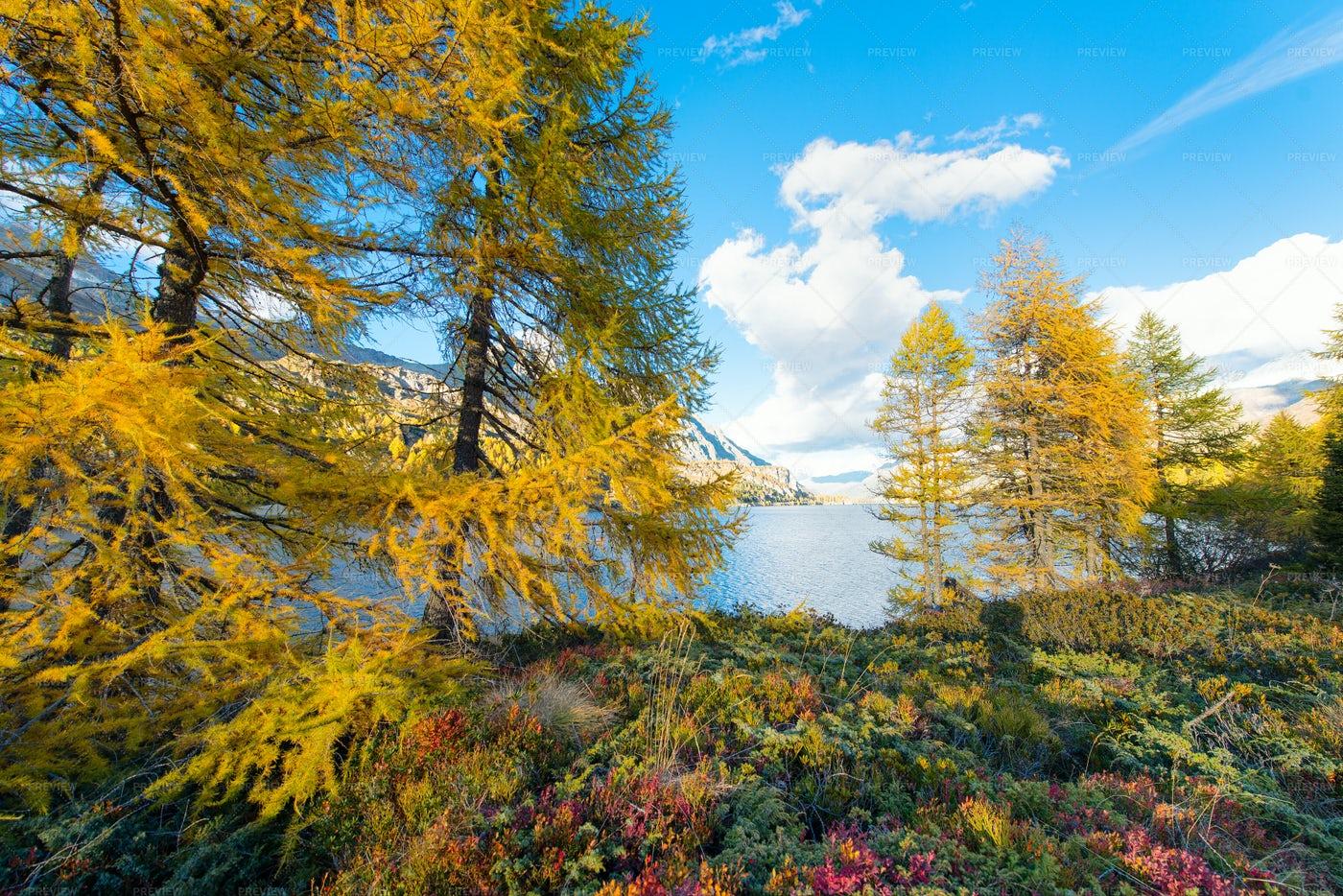 Autumn Forest Colors: Stock Photos