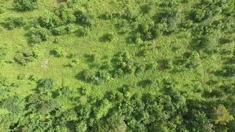 Aerial View Of Mountain Forest: Stock Video