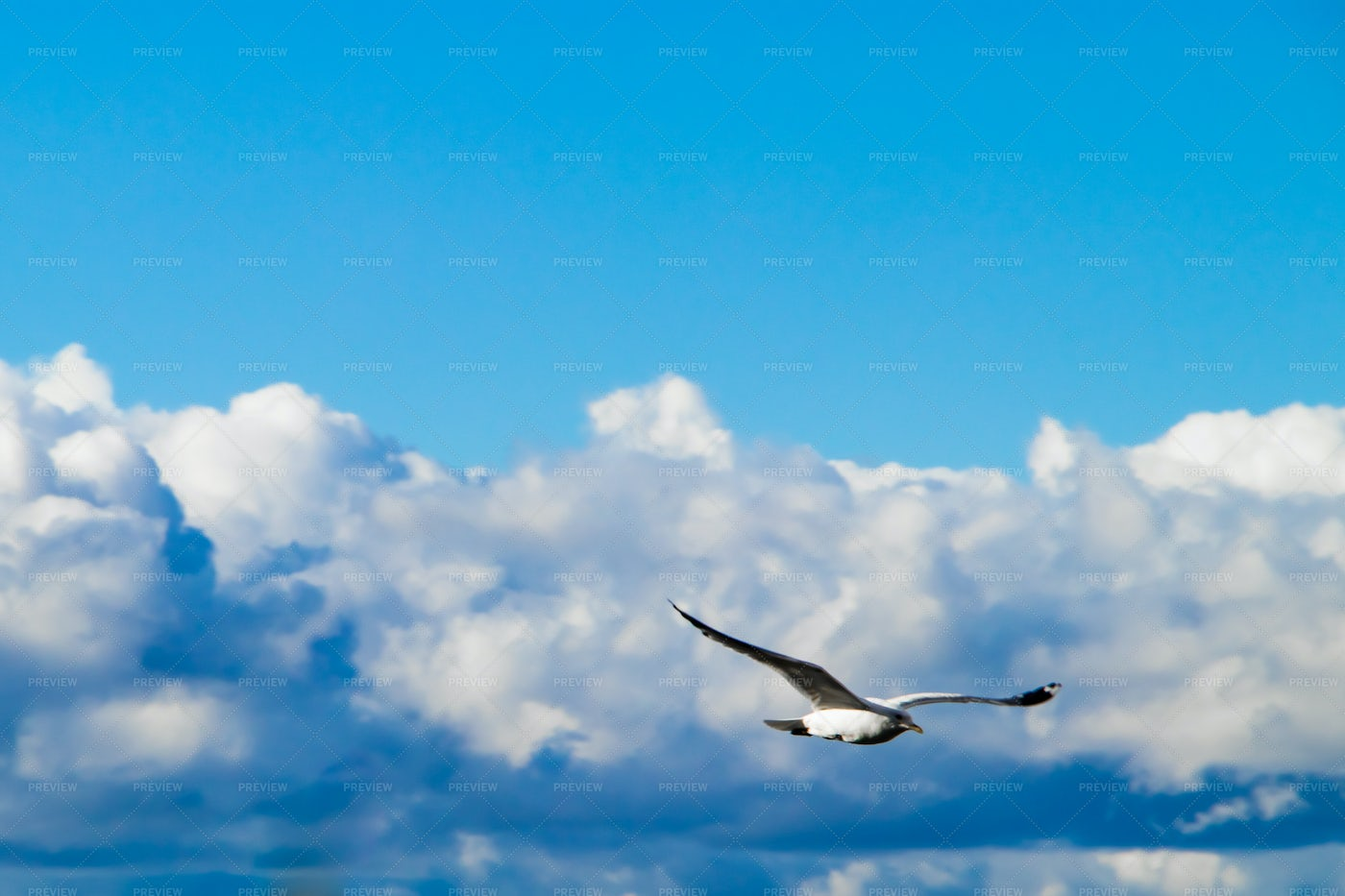 A Flying Seagull: Stock Photos