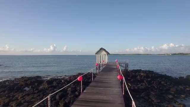 Flying Back From Wooden Pier: Stock Video