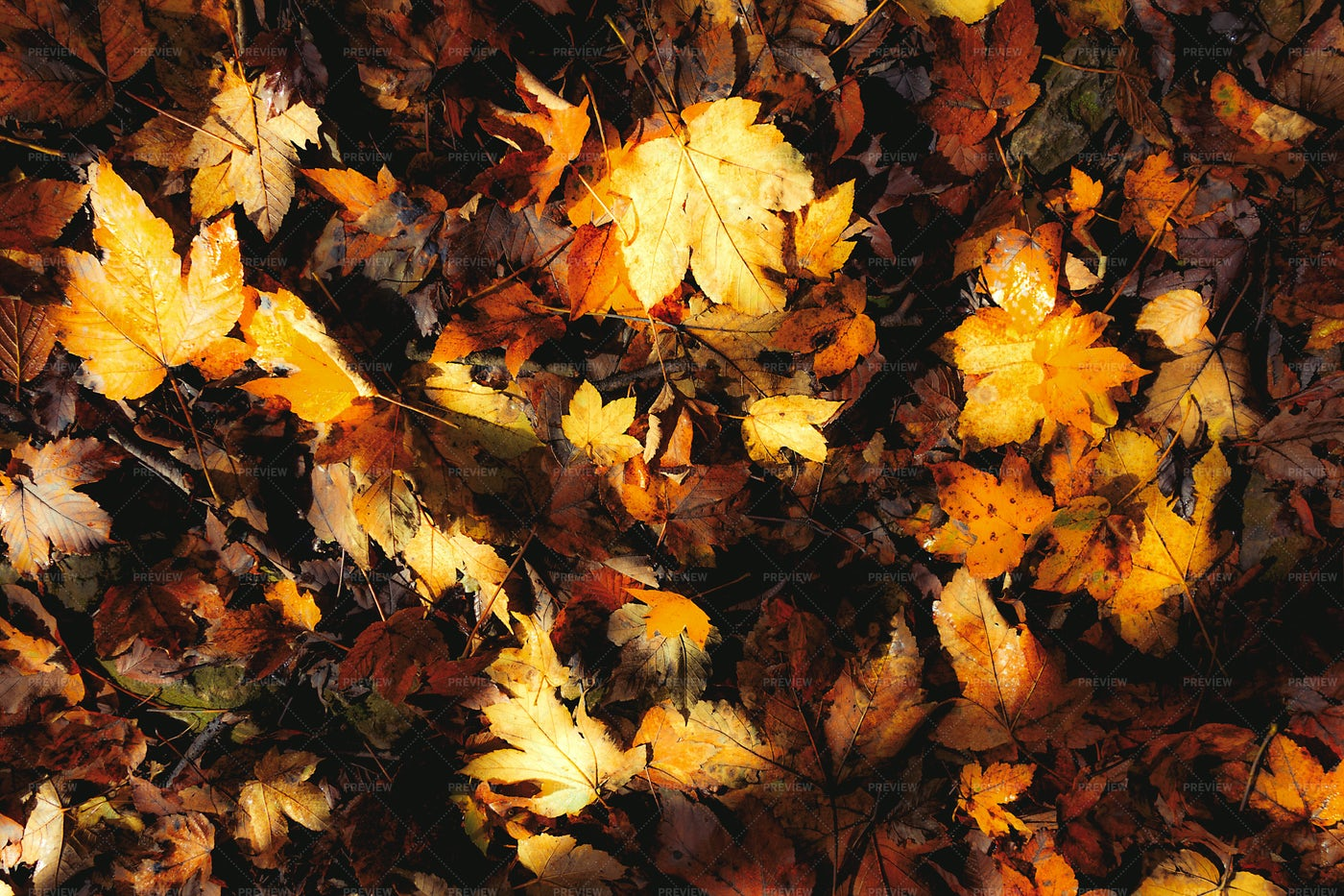 Autumn Leaves Background: Stock Photos