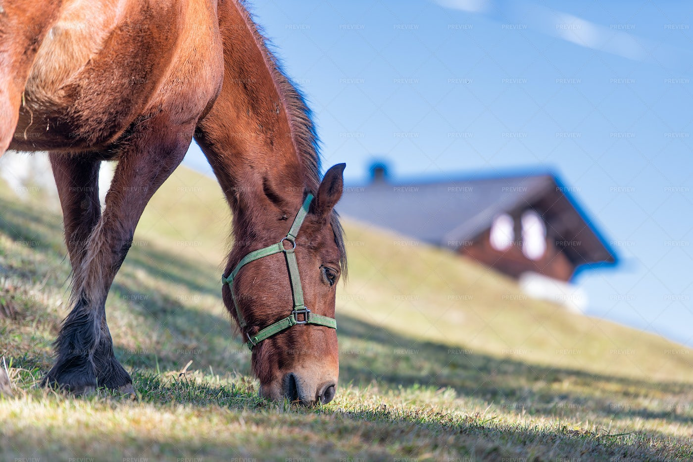 Horse Eating Pasture: Stock Photos