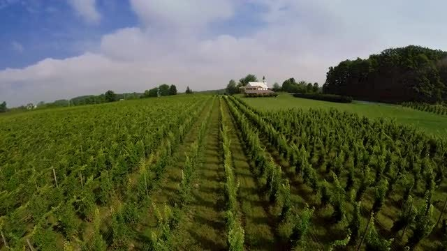 Flying Over A Beautiful Vineyard: Stock Video