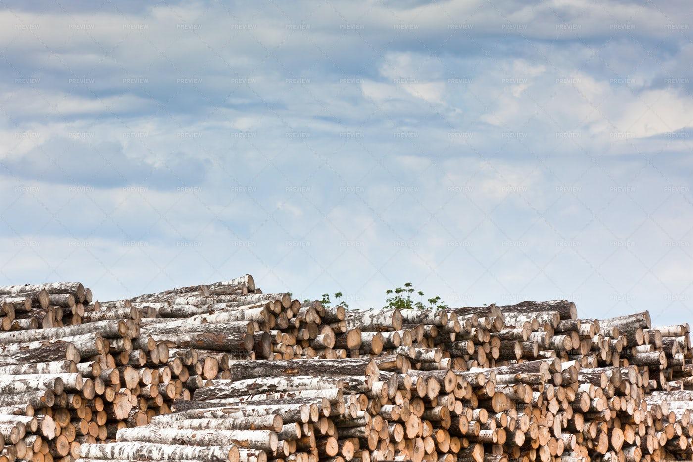 Pile Of Wood: Stock Photos