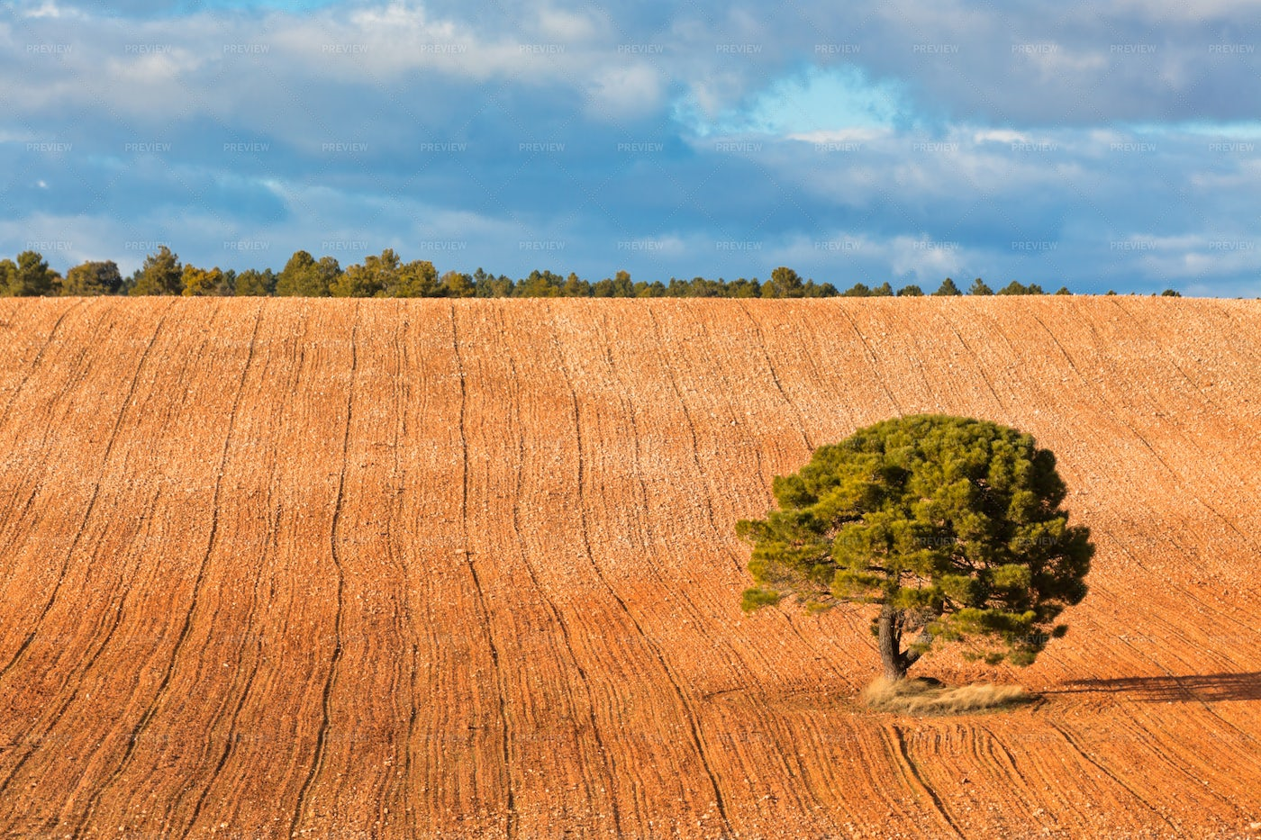 Lonely Tree In A Field: Stock Photos