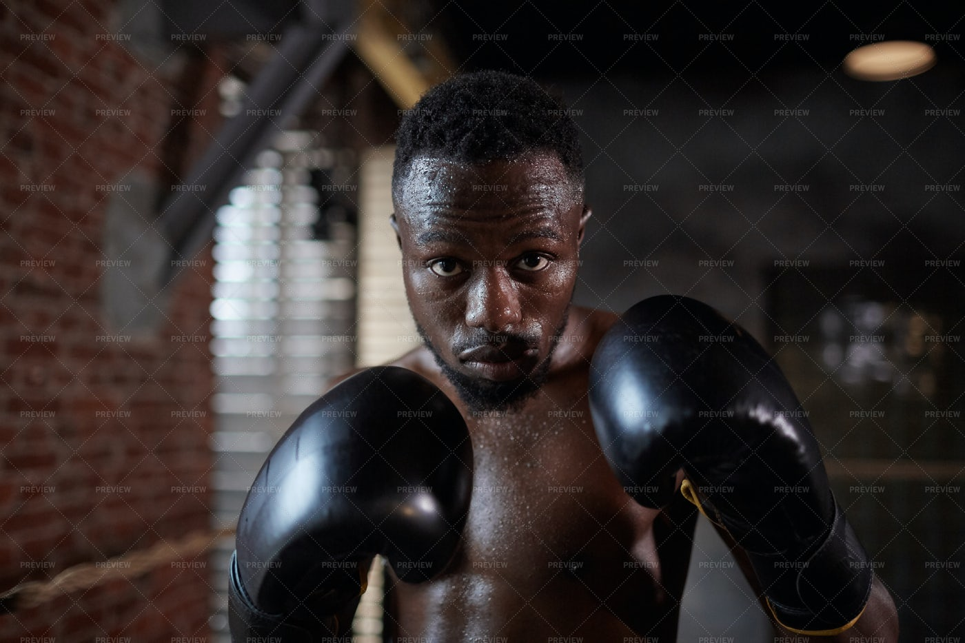 Boxer Ready To Fight Portrait: Stock Photos