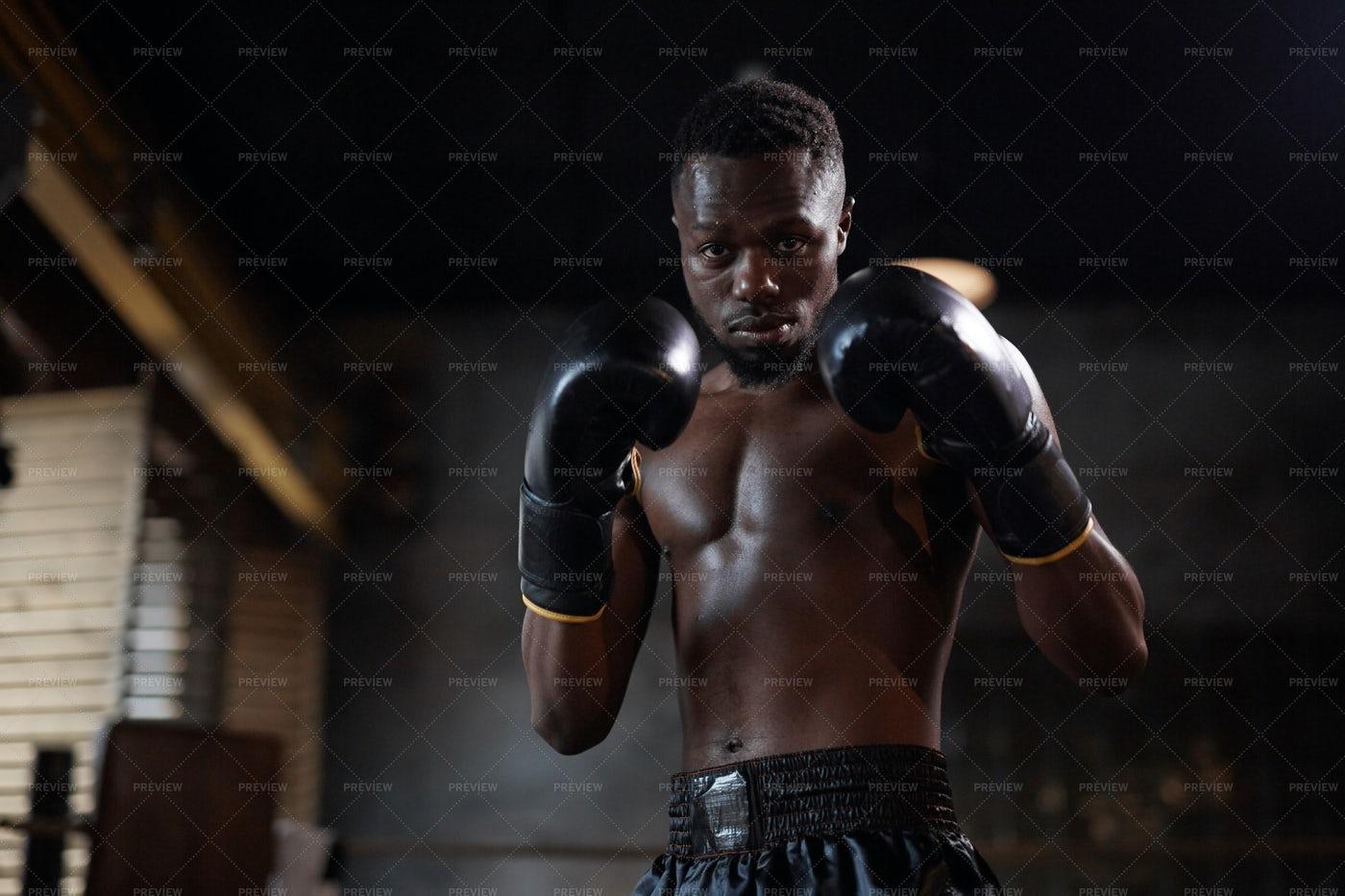 Boxer Portrait With Copy Space: Stock Photos