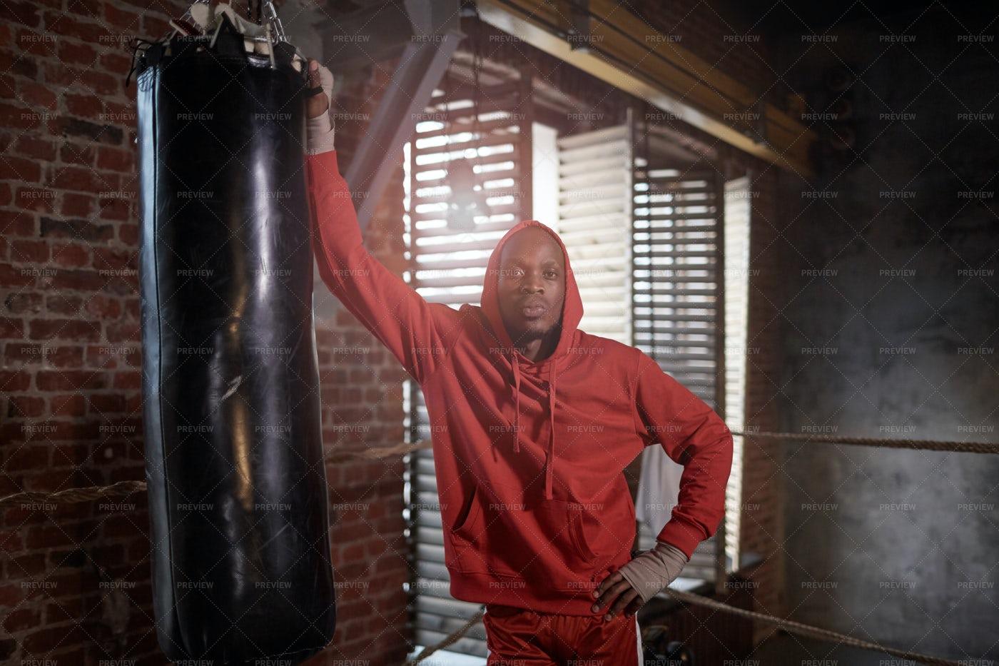 Defiant Boxer Portrait: Stock Photos