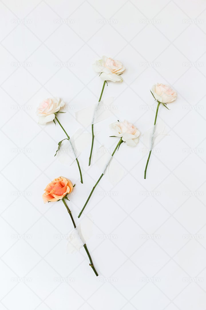Pink And White Roses: Stock Photos
