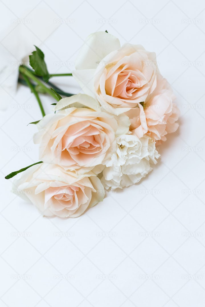 White And Pink Roses: Stock Photos