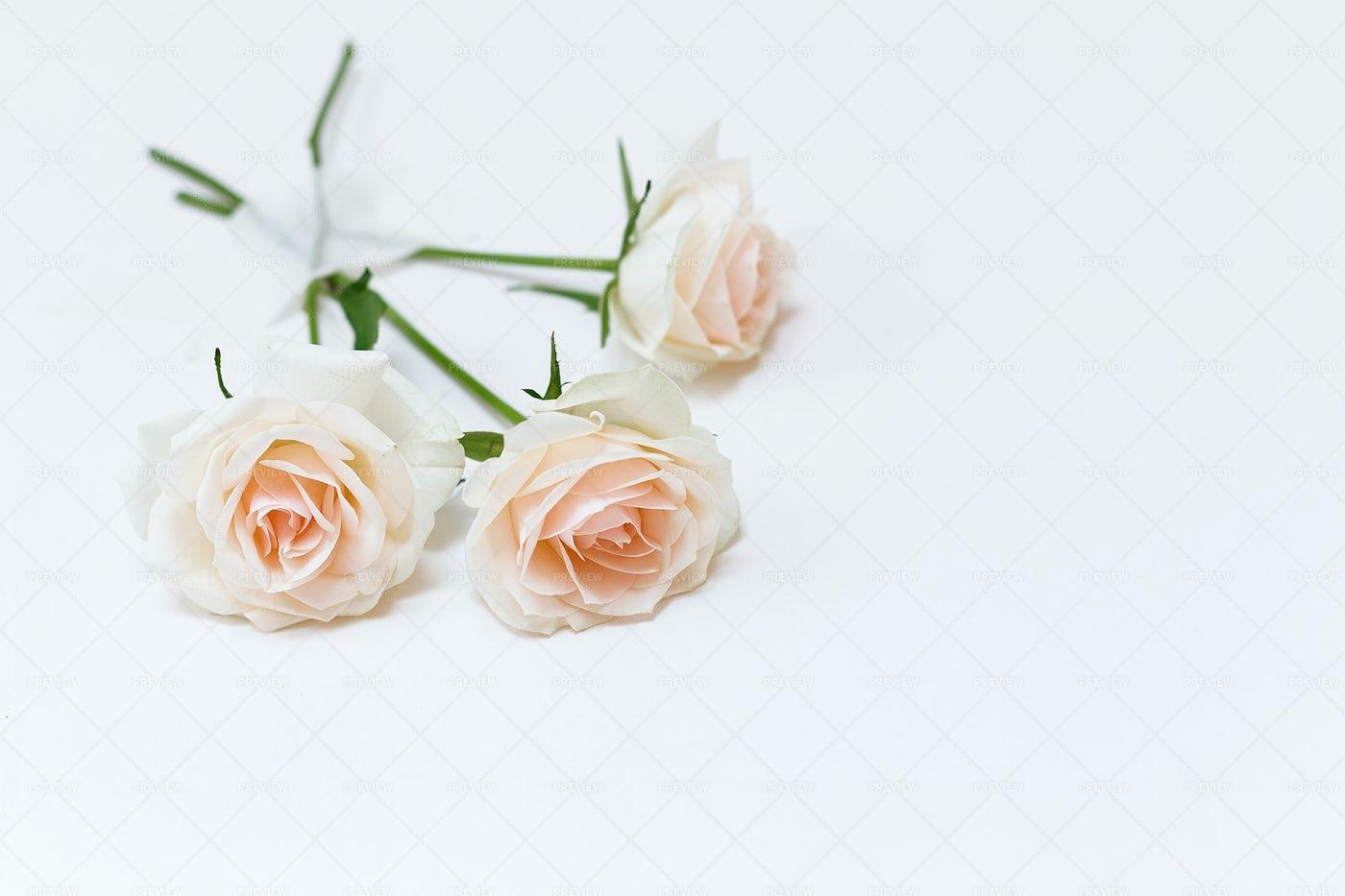 Three Soft Roses: Stock Photos