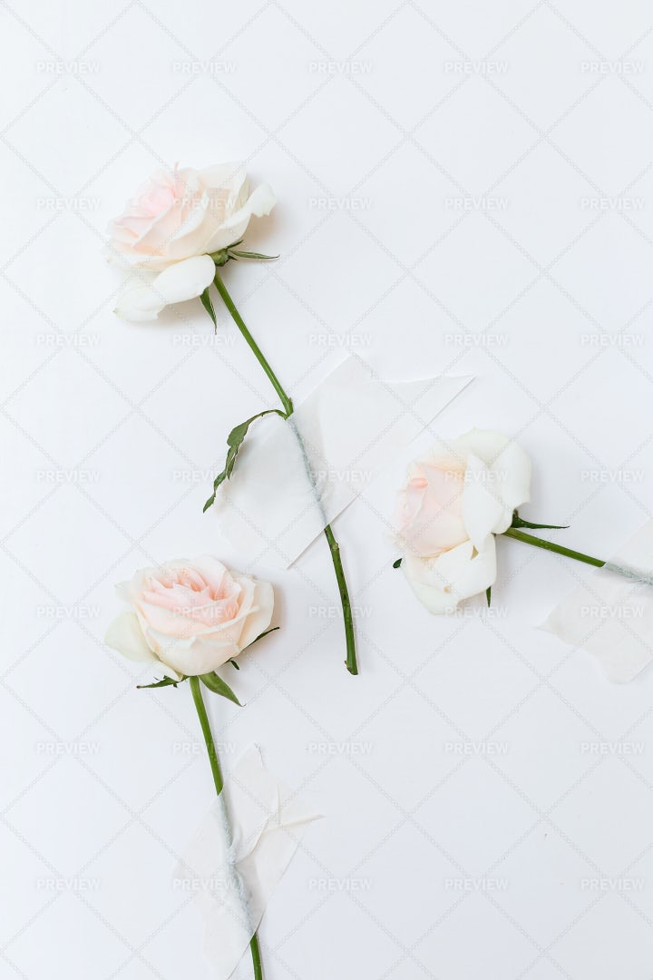 Roses On A Wall: Stock Photos