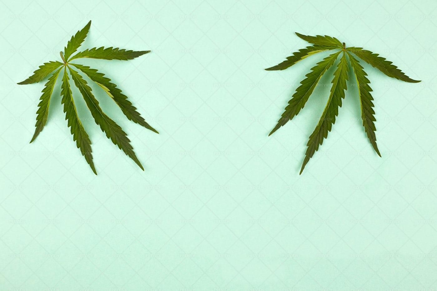 Cannabis Leaves: Stock Photos
