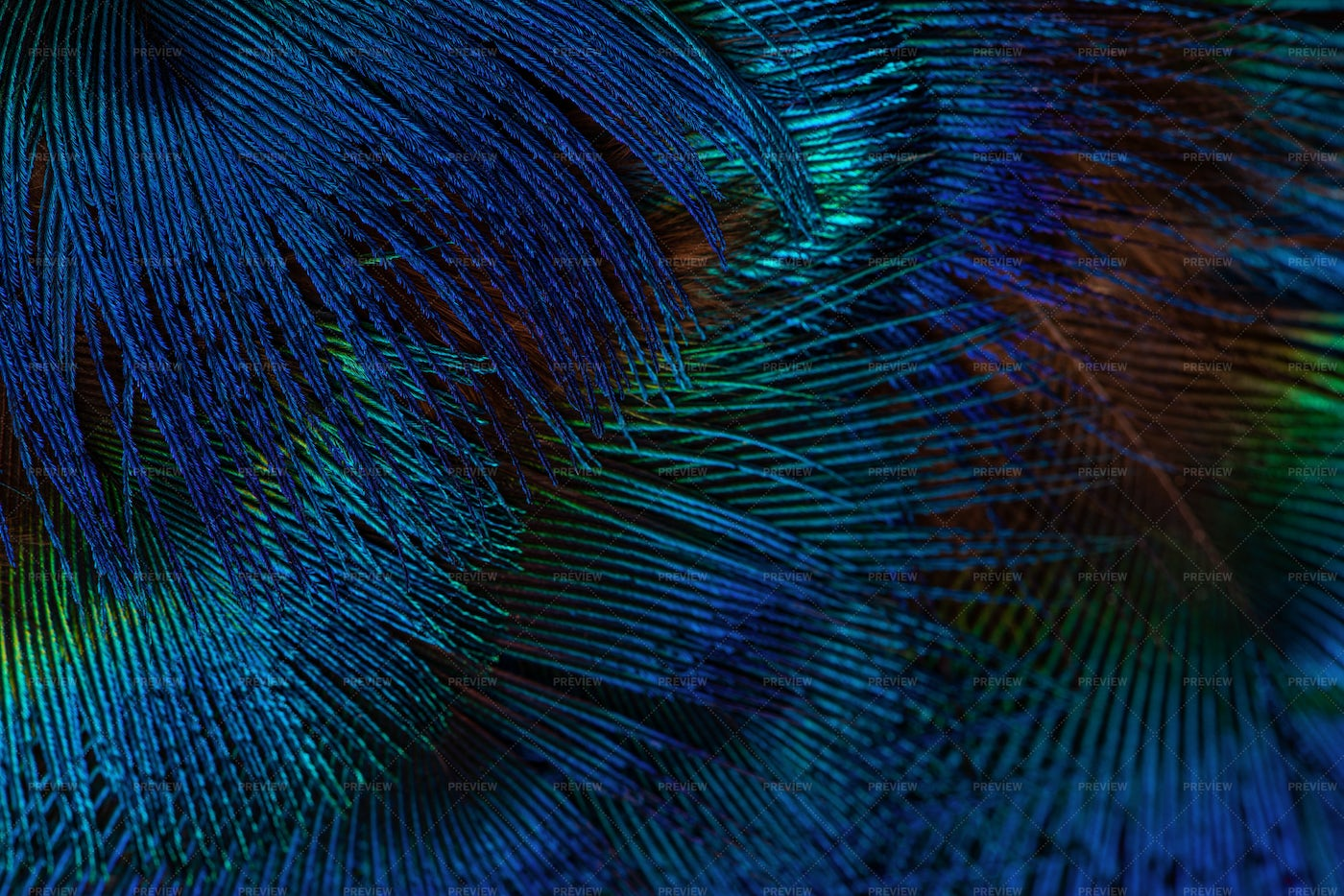 Dark Blue Feathers Background: Stock Photos