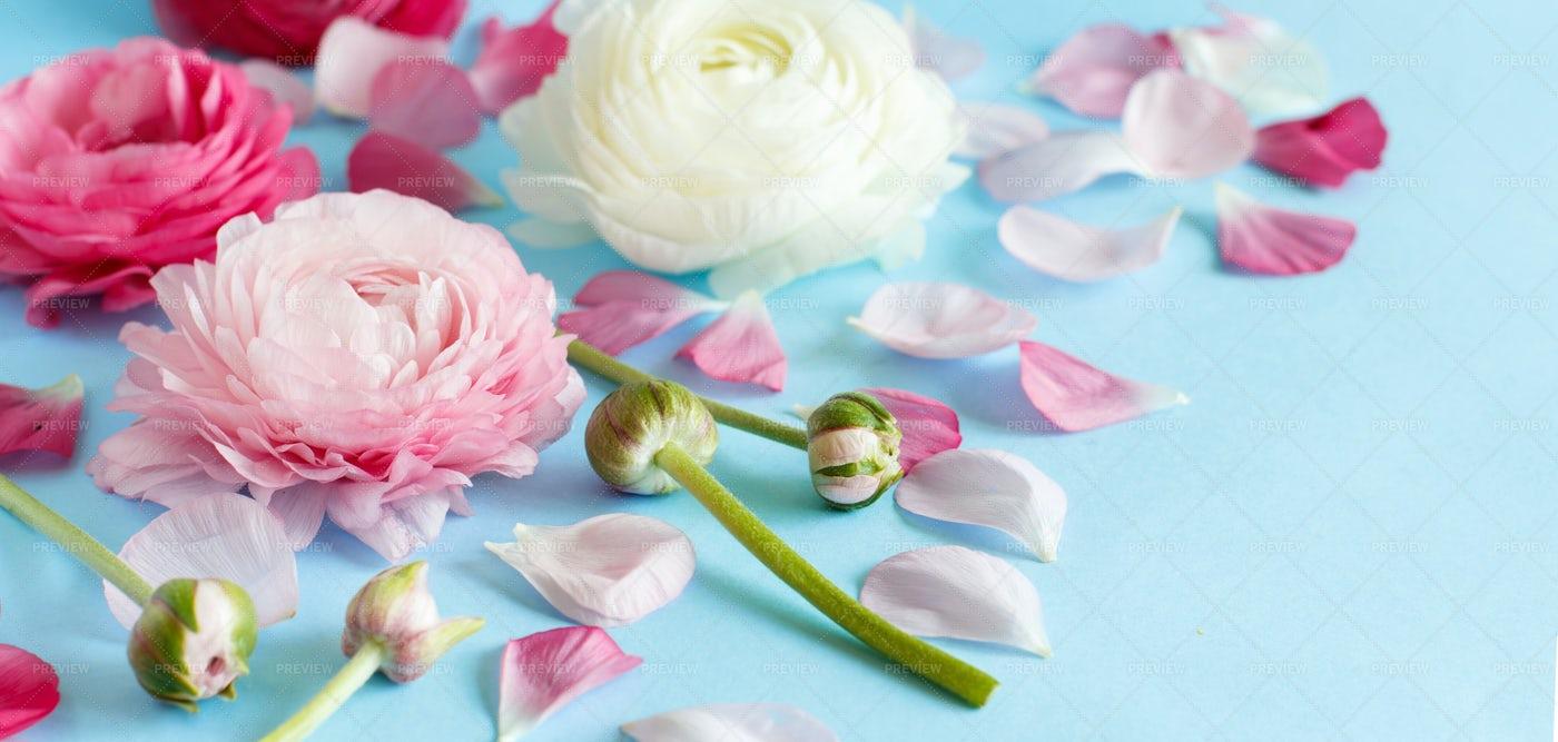 Flowers On Light Blue: Stock Photos