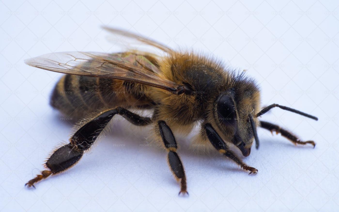 Bee Macro: Stock Photos