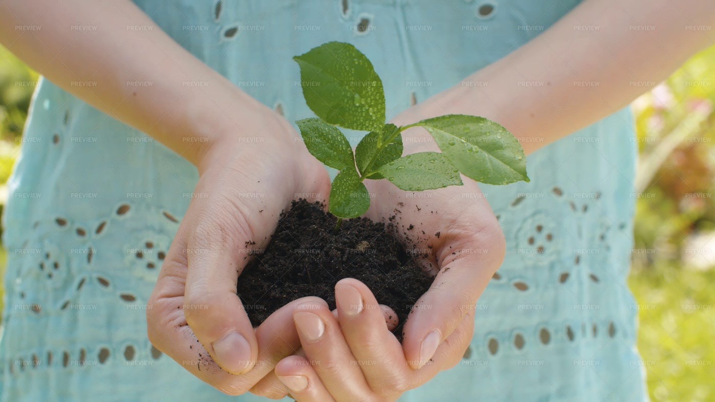 Hands Holding A Seedling: Stock Photos