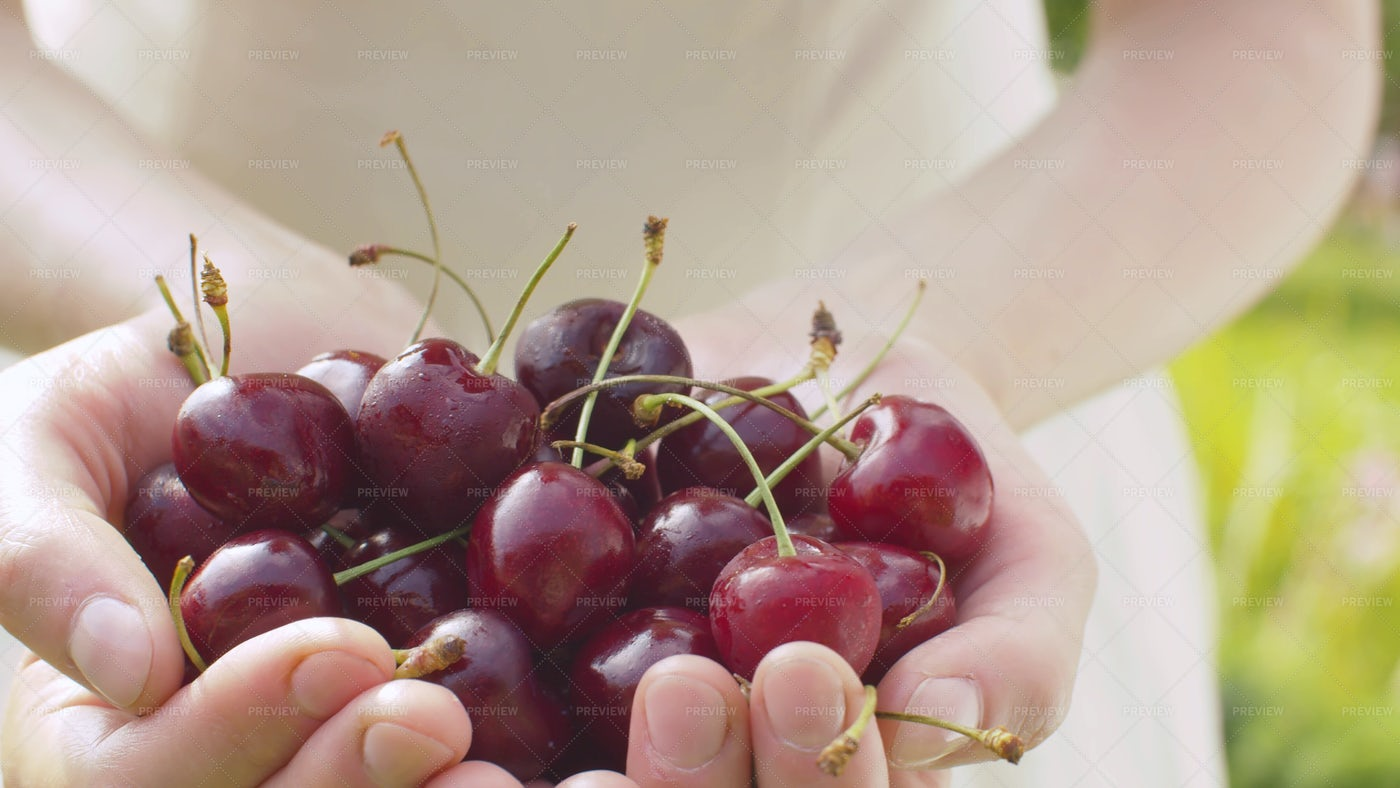 Ripe Cherries: Stock Photos
