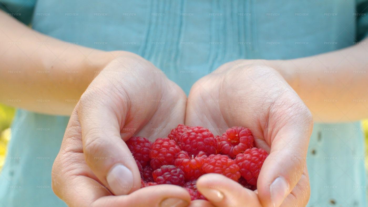 Holding Ripe Raspberries: Stock Photos