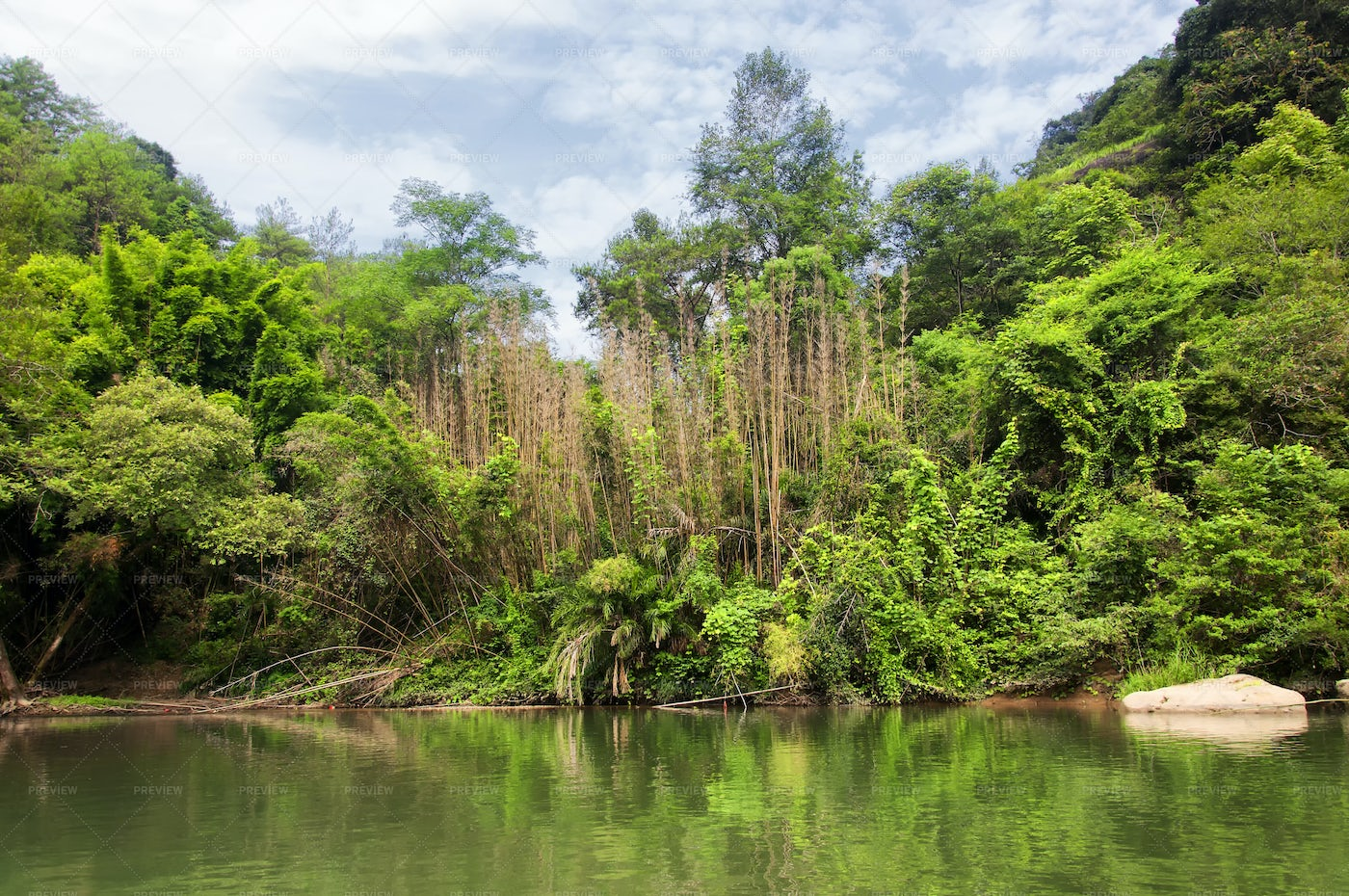 River In Forest: Stock Photos