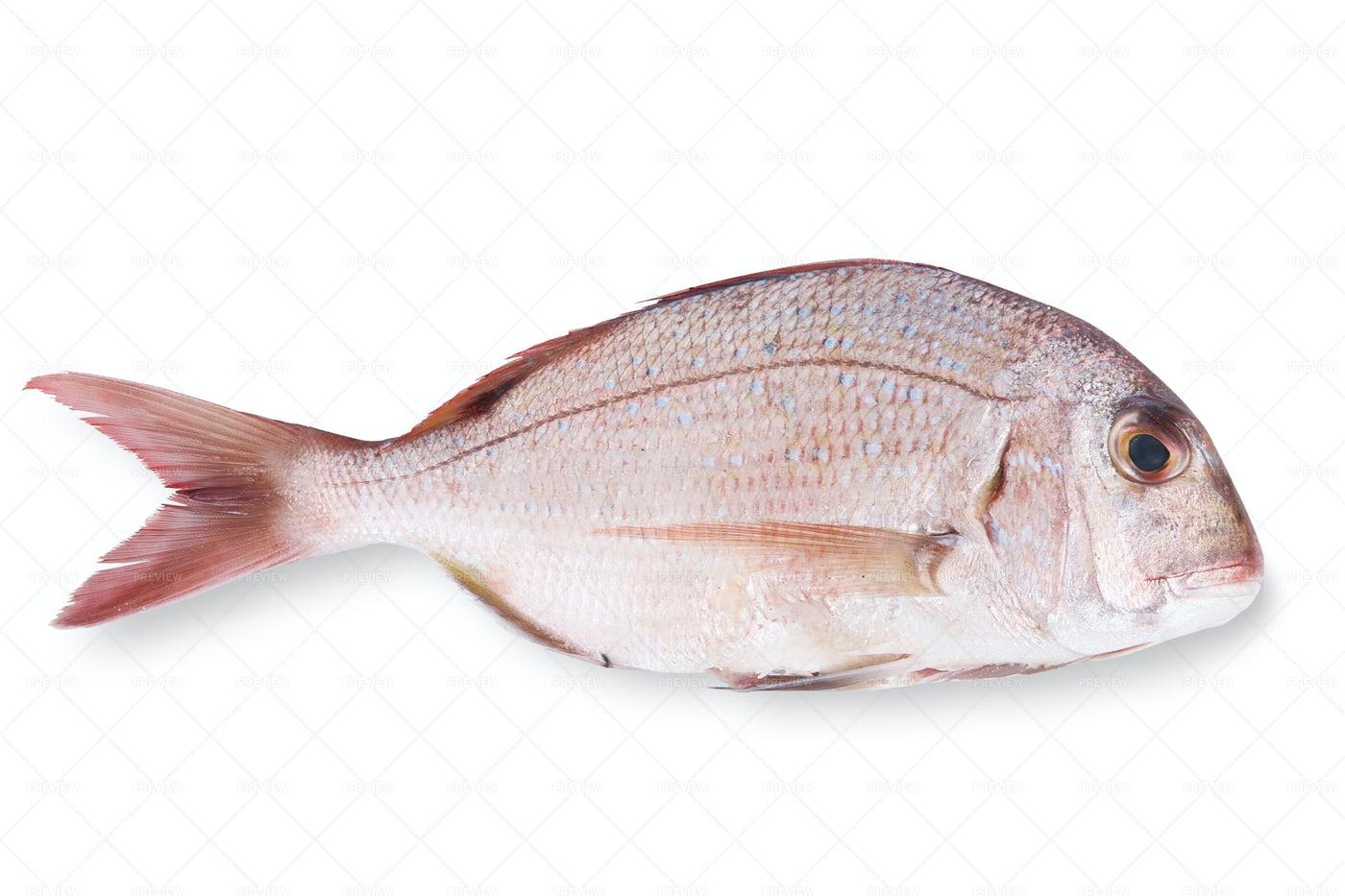 Fresh Fish: Stock Photos