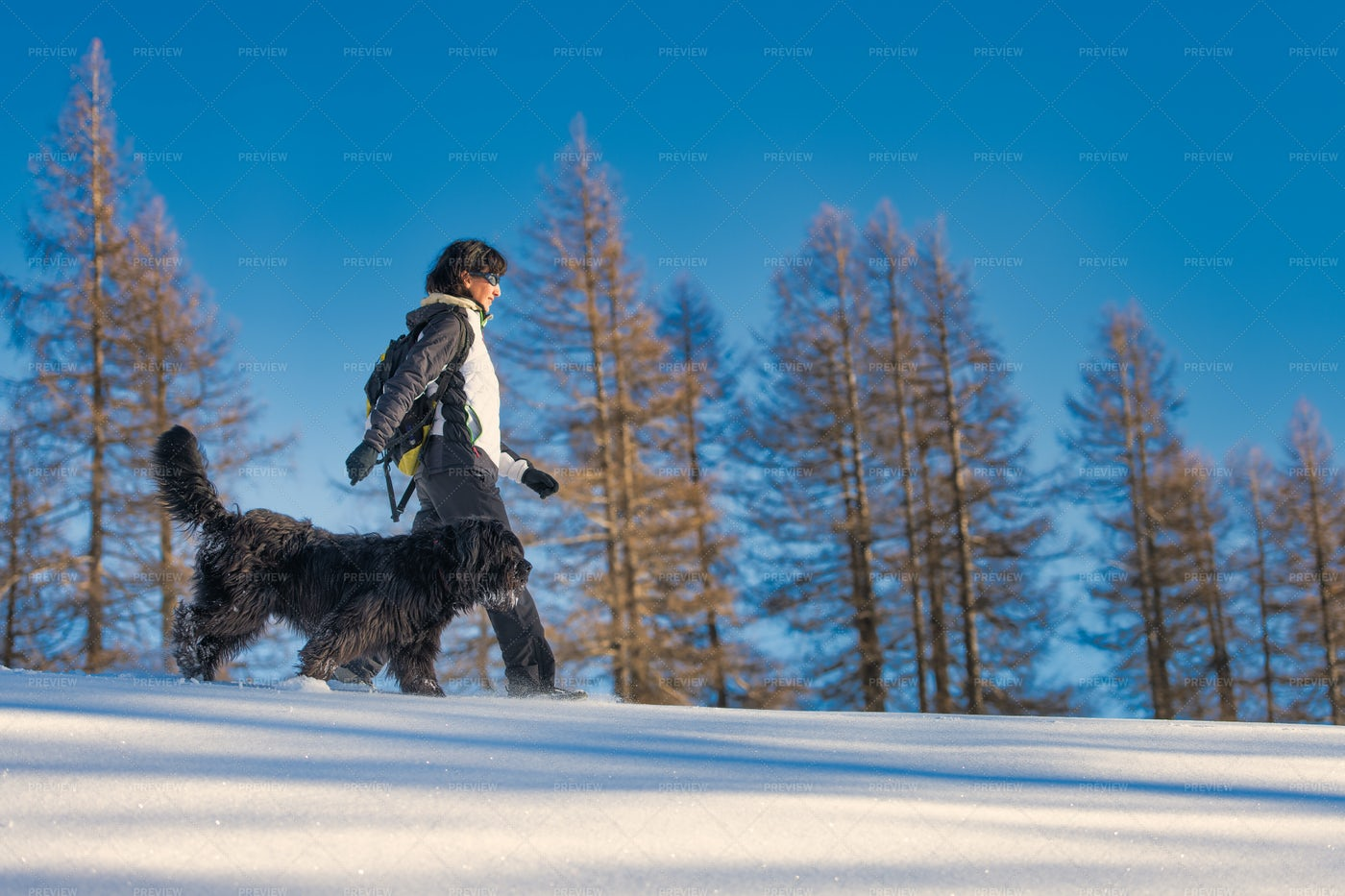 Woman Walking With Dog In The Snow: Stock Photos