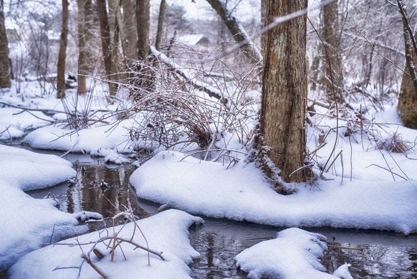 Snowy Winter Forest Stream: Stock Photos