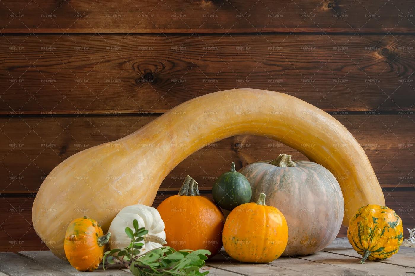 Pumpkin Harvest: Stock Photos