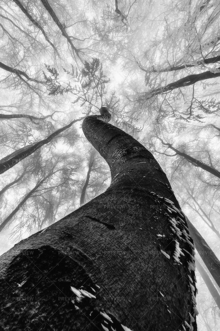 Winter Tree: Stock Photos