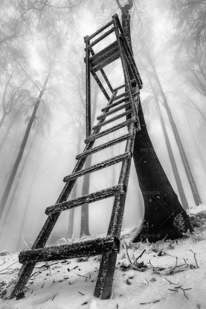 Winter Beech Forest: Stock Photos