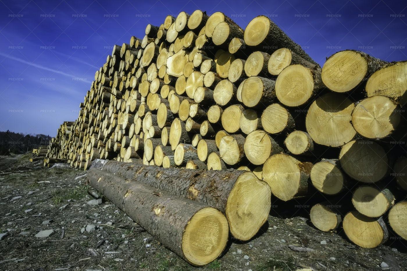 Pile Of Cut Tree Trunks: Stock Photos