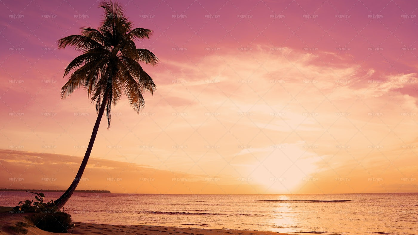 Palm Tree At The Shore: Stock Photos