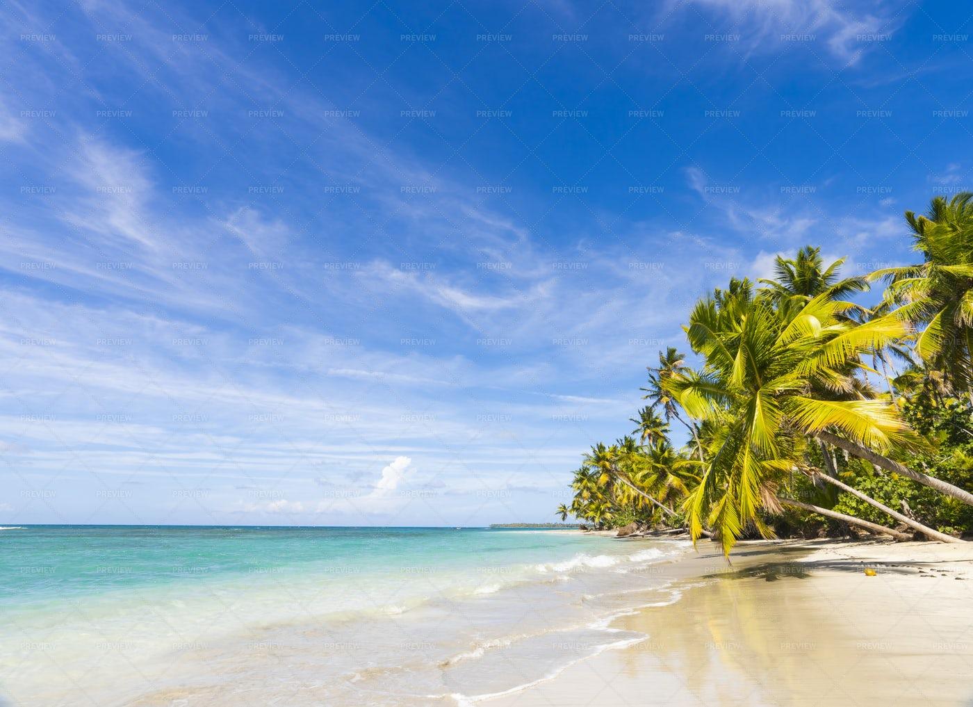Sunny Palm Tree Beach: Stock Photos