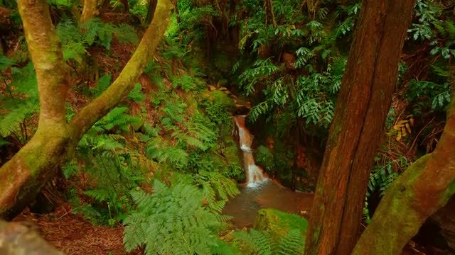 Caldeira Velha Park In Azores: Stock Video