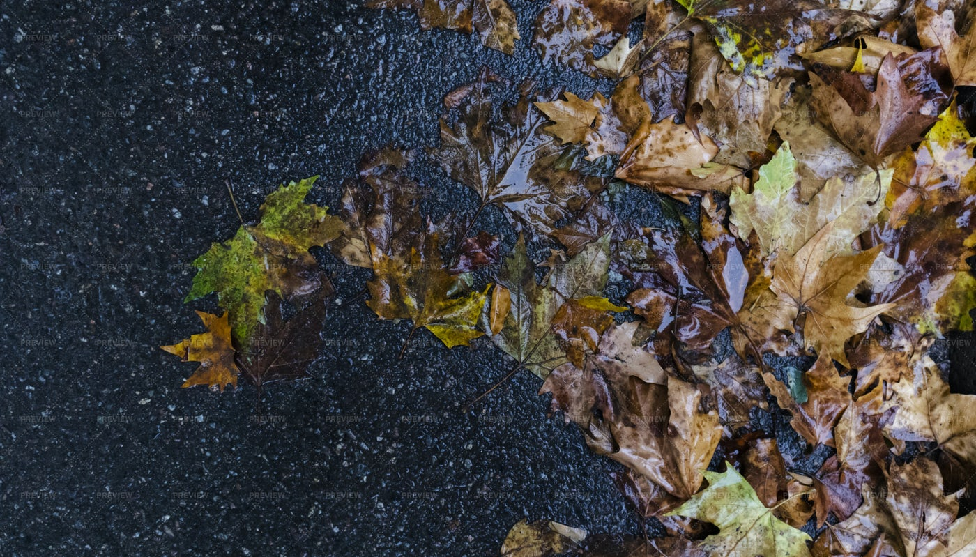 Autumn Leaves On The Road: Stock Photos