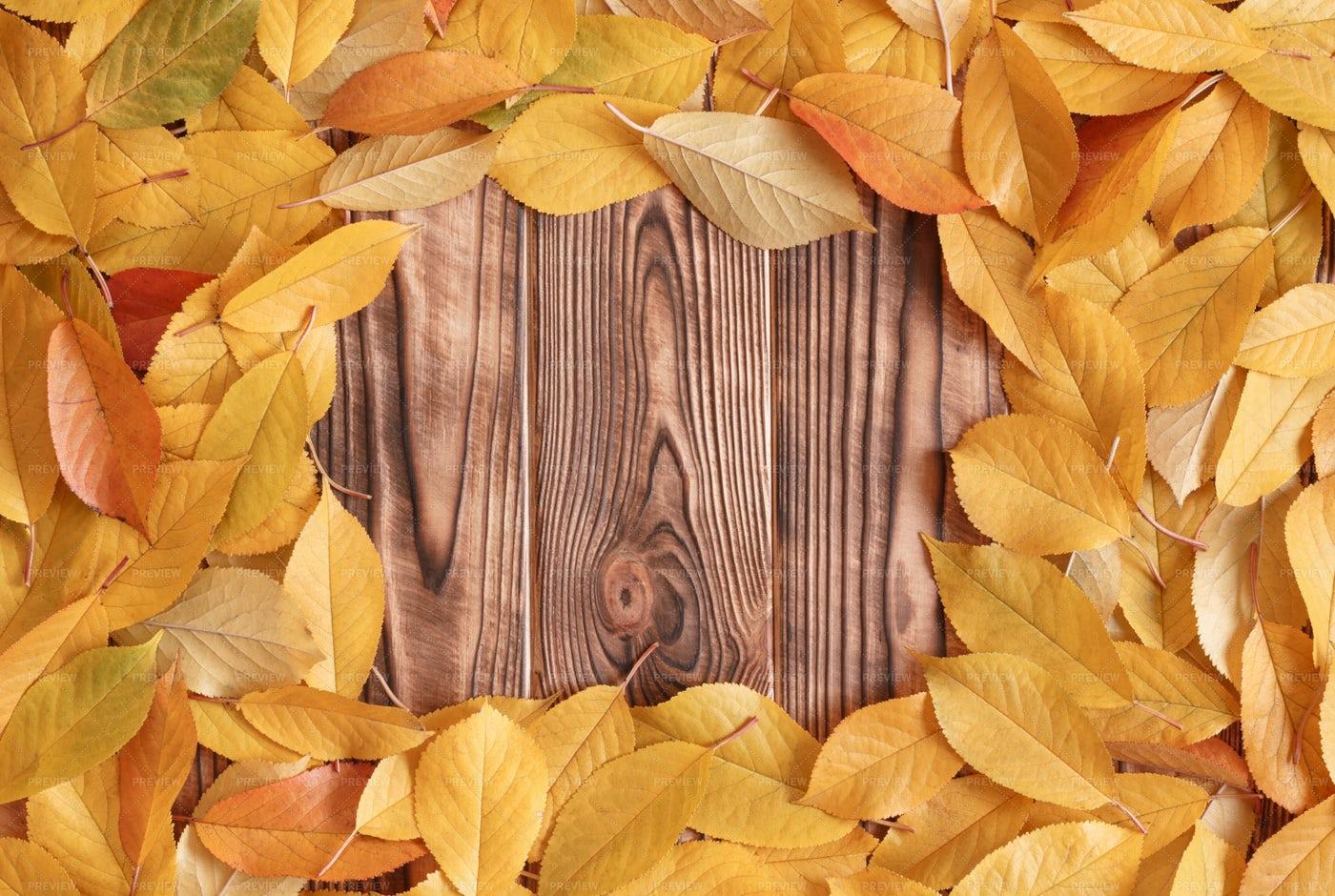 Frame Of Autumn Leaves: Stock Photos