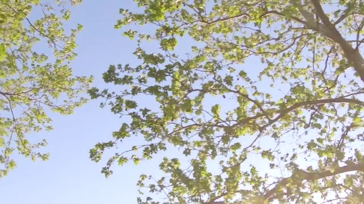Spring Trees : Stock Video