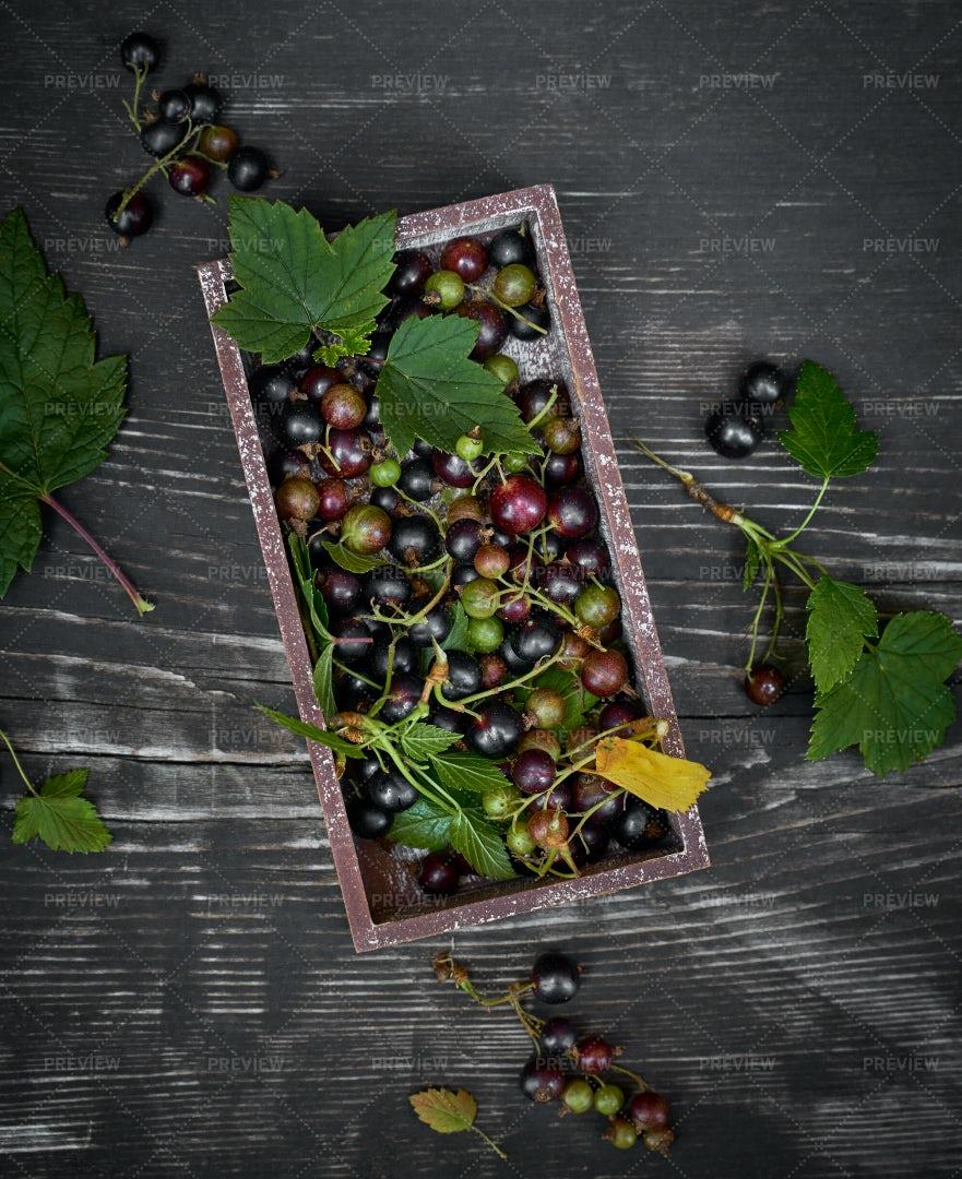 Blackcurrants In A Box: Stock Photos