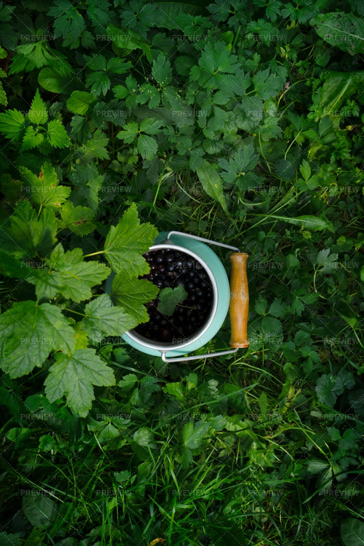 Can Of Blackcurrants: Stock Photos
