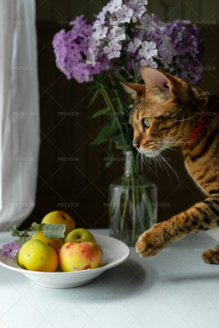 Cat And Apples: Stock Photos