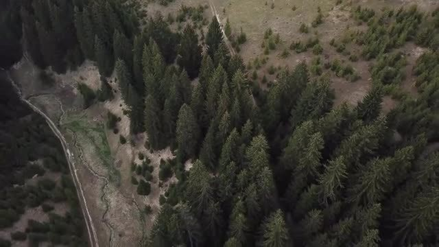Mountain Forest Aerial View: Stock Video