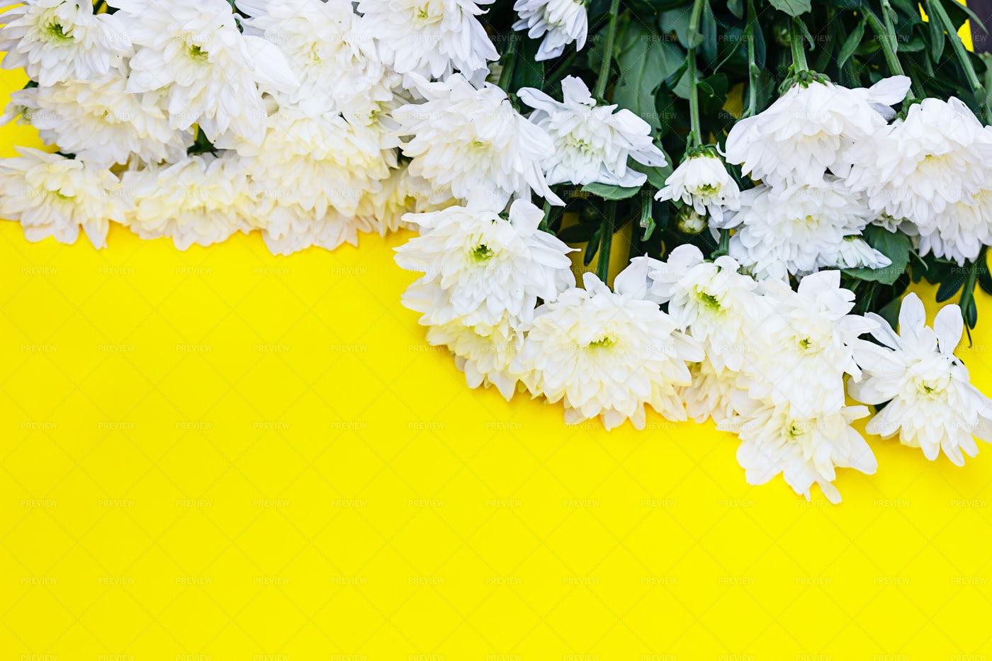 Many Chrysanthemum Flowers: Stock Photos
