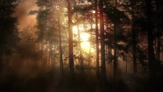 Foggy Morning Forest: Motion Graphics