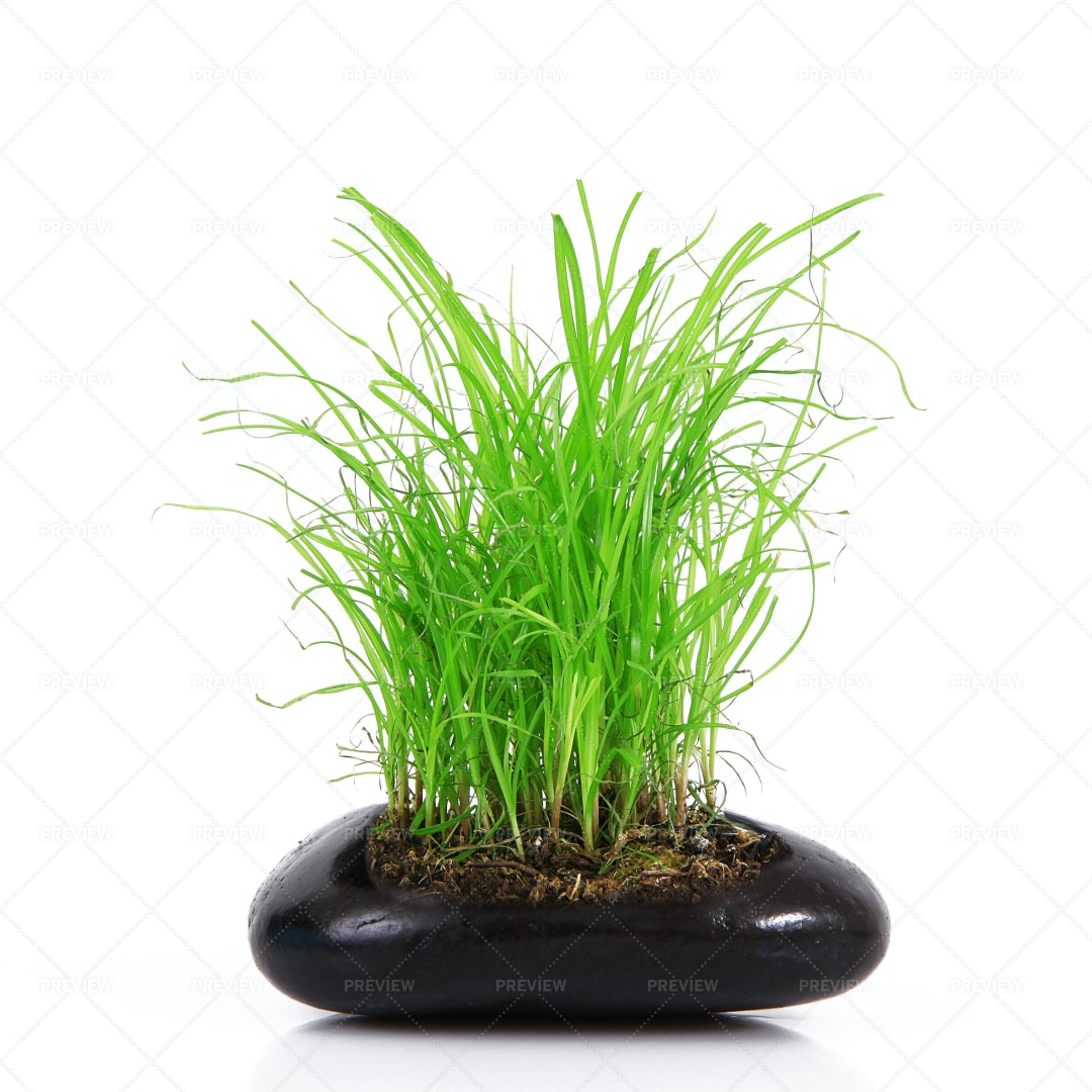 Grass In Stone: Stock Photos