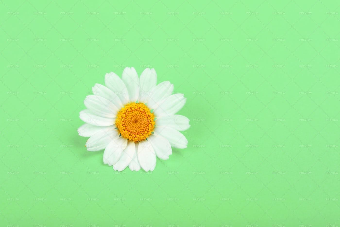 Chamomile Flower: Stock Photos