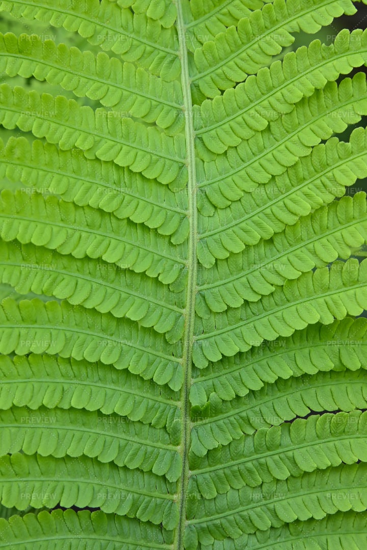 One Green Fern Leaves: Stock Photos