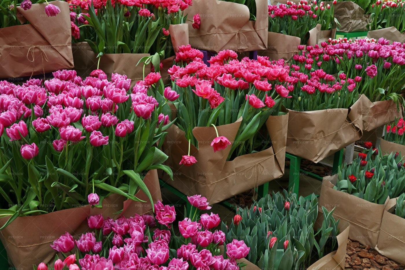 Tulip Flowers In Greenhouse: Stock Photos